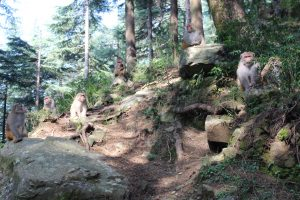 Monkeys and hiking in the Himalayas
