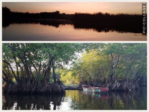Mangroves in Monterrico, the best beach in Guatemala
