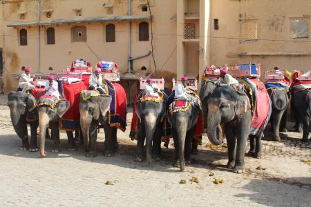 Elephants at Amber Fort, Jaipur